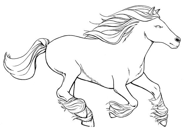 Horse runnin